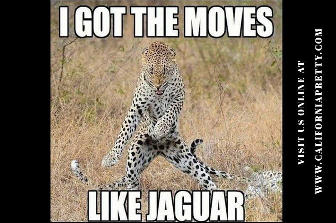 Jaguar Meme: I got the moves like Jaguar. - California Pretty Fashion Magazine