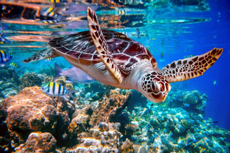 Sea Turtle Accidently Eat Plastic Trash Mistaking it For Food in the Ocean Every Year - California Pretty Magazine